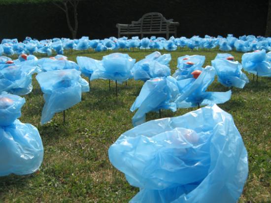 Fleurs en sacs poubelles bouchon de protection for Maladie du miroir